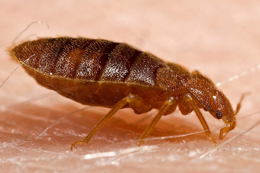 Don't Try and Get Rid of Bed Bugs on Your Own